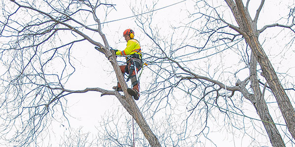 Edmonton Tree Cutting & Removal