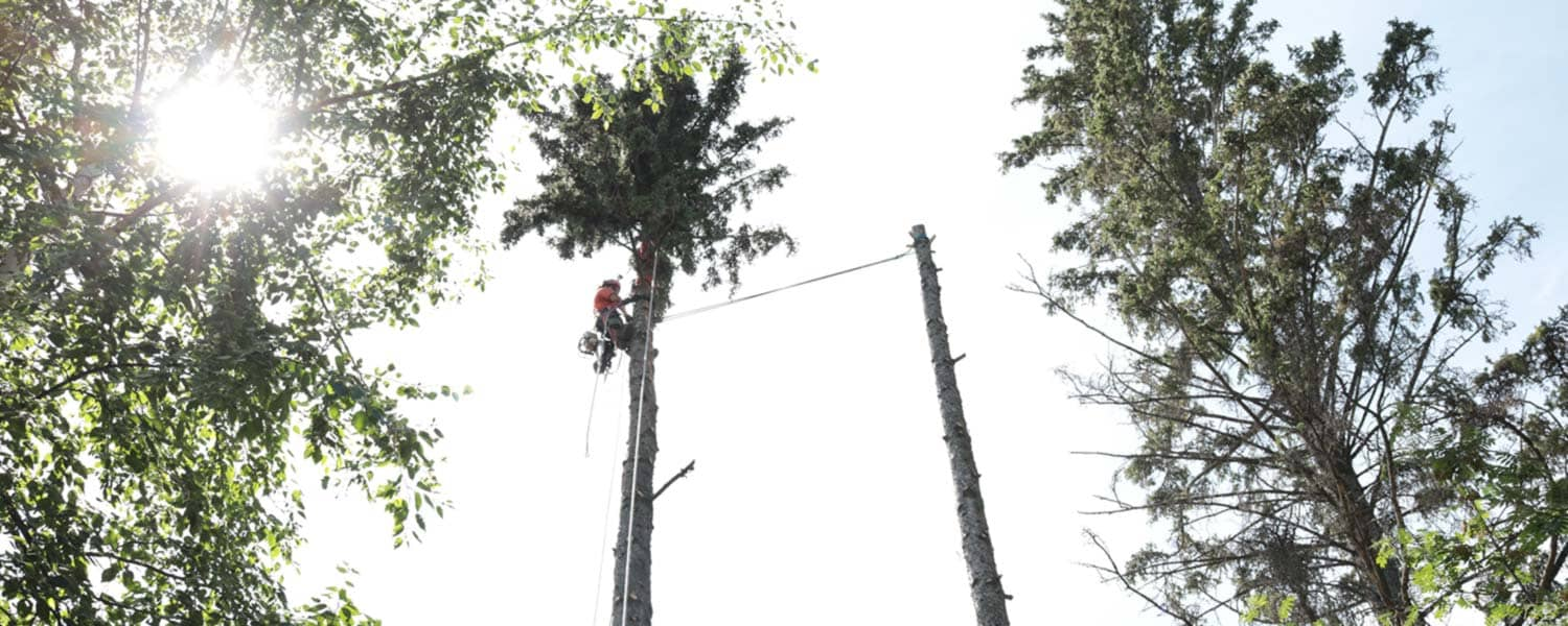 Beaver Bros Edmonton Tree Cutting